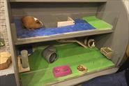 Клетки для домашних животных)