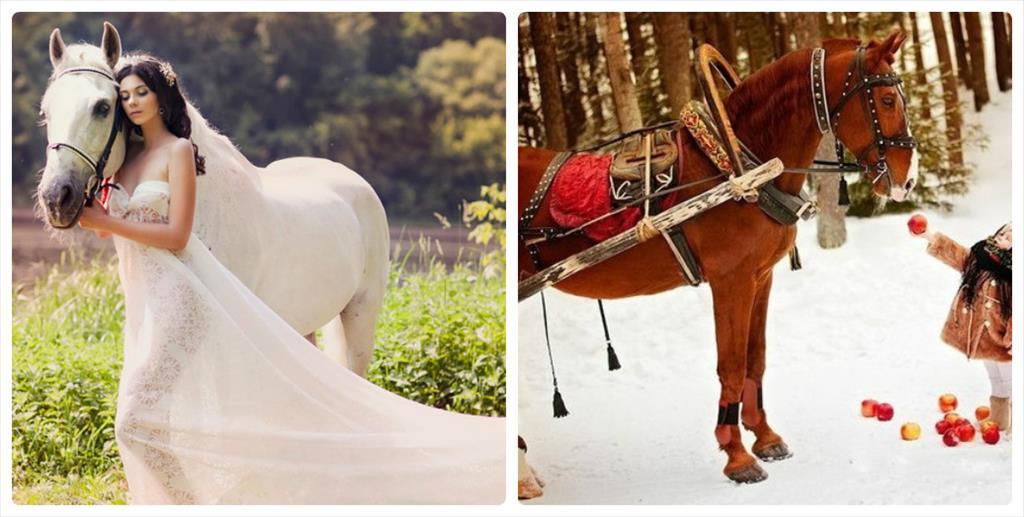 фотосессия осенью на лошади